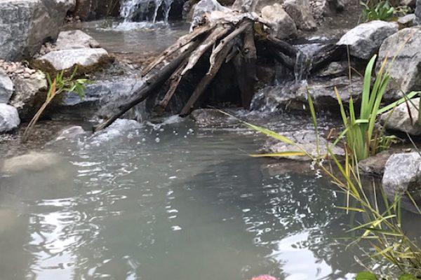 Pond - Comox Valley, BC